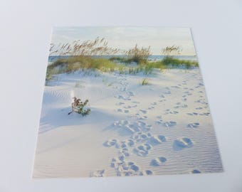 beach sand dune square card trace legs dune vegetation