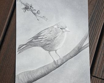 Original charcoal bird in a cherry blossom tree drawing