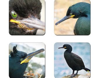 Set of 4 Shag drinks coasters featuring award winning photography by UniquePhotoArts.