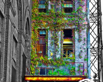 "Abandoned Factory - Photo Art Print - ""VYING VINES"""
