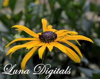 Flower Photography/Spring Photo/Digital Images/Digital Download/Digital Image/Nature Photography