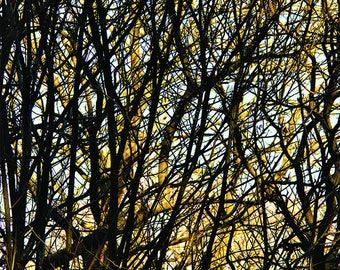 Trees 2 - **FREE UK Shipping! MC14804