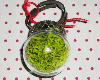 Ring globe plant with MOSS (bottle ring)