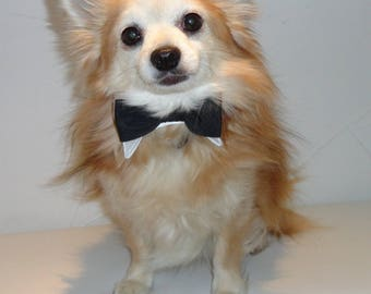 Bow tie for dog