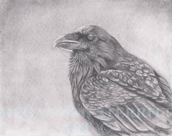 "Raven - Original drawing, 11""x 14"", graphite on paper, by Megan Ann Sterritt."