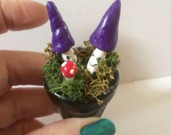 Purple witch toadstools in terracotta pot