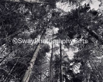 Pack of 10 Black and White Tree square cards with envelopes