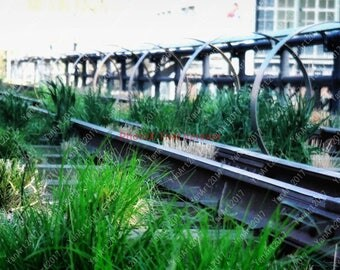 Highline Park in Manhattan,New York City, Photography, Digital Art,  Art Prints or License for Art Prints