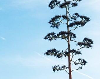 Desert tree top