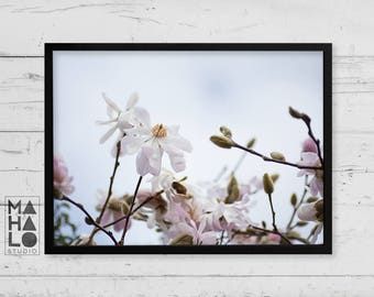 Blush pink star magnolia photograph printable wall art, flower decor, white floral print, botanical photography, pale pink and blue