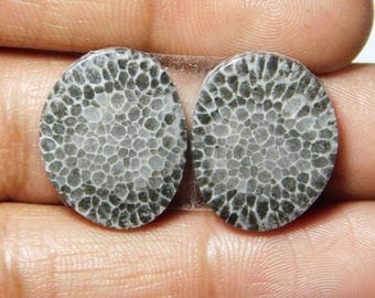 Pair ! Black Fossil coral Cabochons 100%Natural Black Fossil coral top quality Gemstone Black Fossil coral Loose stone 25.60cts.(20x16x3)mm