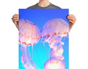 Moon Jellyfish Trio - Poster