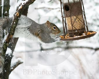 A Hungry Squirrel | Wildlife Photo Art | Nature Lover Gift | Fine Art Photography | Personalization | BDPhotoShoppe | Home Office Decor