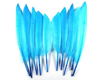 Mallard Duck Wing Feathers Turquoise 10717