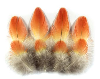 Rosella Tailcovert  Feathers 12503