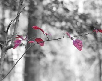 Color Splash Leaves