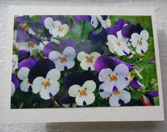 Flowers Blank Greeting Card