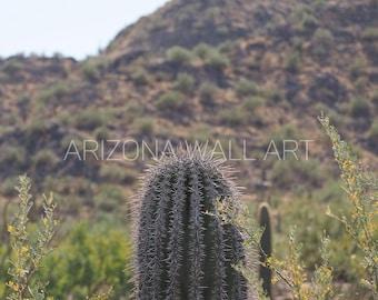 Barrel Cactus Digital Print