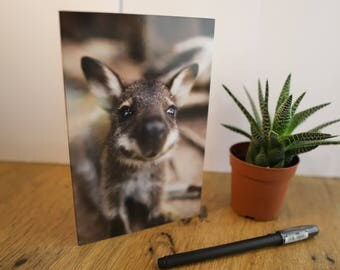 Nature Greeting Cards - Curious Wallaby Joey - Australian Wildlife