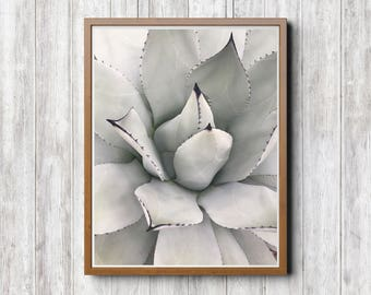 Agave Macranthus Wall Decor, 18x24,