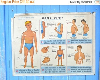 ON SALE Vintage 1950/50s  French educational chart classroom poster Anatomy bones Body