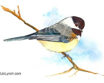 Chickadee Art Prints, Chickadee Print of Watercolor,  Chickadee Collectibles, Artist - Jo Lynch,