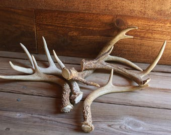 DEER ANTLERS (5) for Display or Artwork Rustic Natural- Camp Decor- Woods Hunting Motif- Jewelry Display