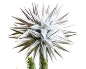 Modern Silver Paper Polish Star Christmas Tree Topper Contemporary Star Decoration for Christmas Tree Holiday Decor - Sterling Silver
