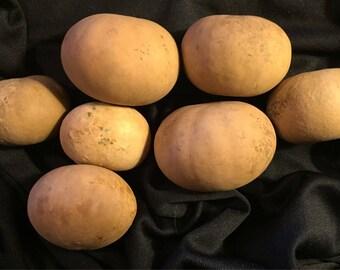 7 Little Flattened Ball Gourds