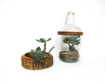 Vintage Jug Terrarium, Half Gallon, Handmade