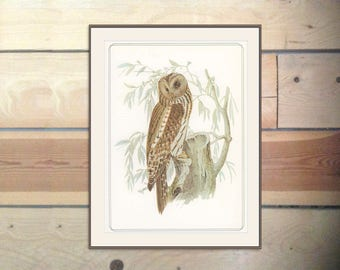 Ural Owl, Falconry Print, Birds of Prey, Vintage Print 1979/109, Josef Wolf, 1870s Birds Ornithology Print Woodland Library Decor