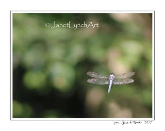 Virginia Dragon Fly  - Bokeh Photography - Green - Blue - Pink - Black and White - In Color - Vintage Sepia - Art Photo Print By Janet Lynch