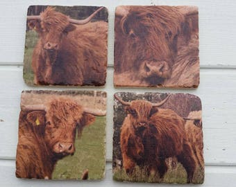 Highland Bull Set of 4 Tea Coffee Beer Coasters