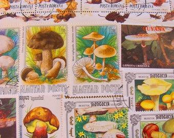 Mushroom Mania 50 Premium Vintage Mycology Postage Stamps Toadstools Shitake Fungus Horticulture Fungi Spore Morel Shroom Topical Philately