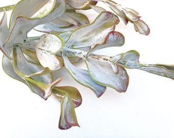 Tall kalanchoe, faux, succulent gray, artificial succulent, fake succulent, tall succulent, grey succulent, succulent arrangement