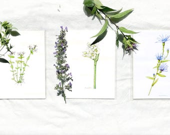 Watercolor Botanical Illustration, Pretty Lavender Wildflowers, Three Art Prints