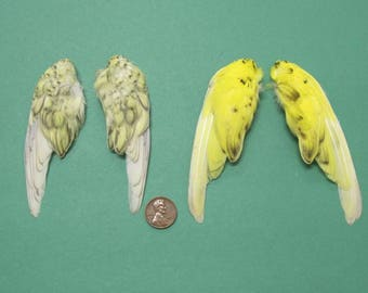 2  Pairs of Yellow Charcoal Dried Birds Wings Feathers Art Craft Taxidermy Shipping Included
