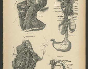 5 Vintage 1880 Human Anatomy Lithograph Print Head, Neck, Muscles, Nerves, Mouth, Throat