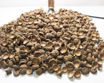 50 Natural Acorn Caps from Missouri, Wreath Rustic Decor White Oak Acorn Caps Various Sizes...  WO50