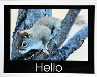 Red Squirrels Saying Hello - Notecards