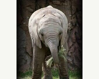 On Sale Baby Elephant, Nursery, Tucson, AZ
