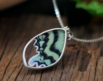 Real butterfly necklace Butterfly wing jewelry Gift for women Real butterfly jewelry Taxidermy jewelry Insect jewelry Butterfly taxidermy