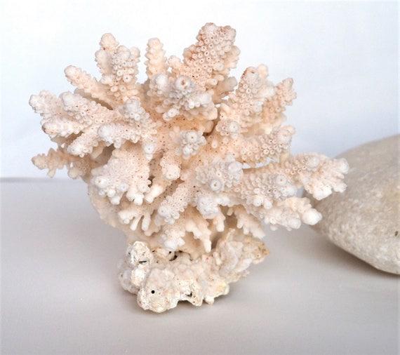 Natural White Coral