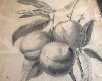 1890s Pencil Drawings, Still Life Drawings, Signed Mabel Swarthout, Dated, Framed Original Artwork, Floral, Fruit, Matted