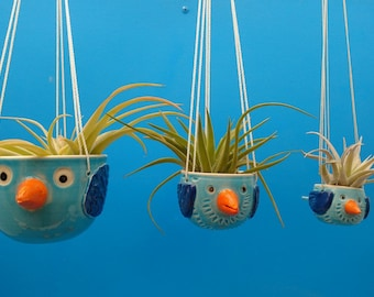 Family of 3 Bluebirds,  Hanging Planters, Air Plants, Succulents, Birders