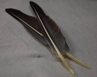 Two Handcut Quills