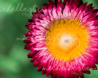 Pink and Yellow Flower, Botanical Garden Print, Nature Photography, Macro Photography, Botany, Digital Download, Garden Print, Flowers, Art