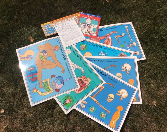 Vintage human body posters, six human learning body posters from 1989, Science literacy system the human body set 1 office decor