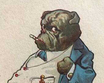 1913 antique dressed Bulldog postcard
