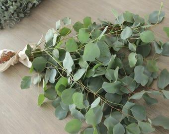 Silver Dollar Eucalyptus 5-7 stem bunches